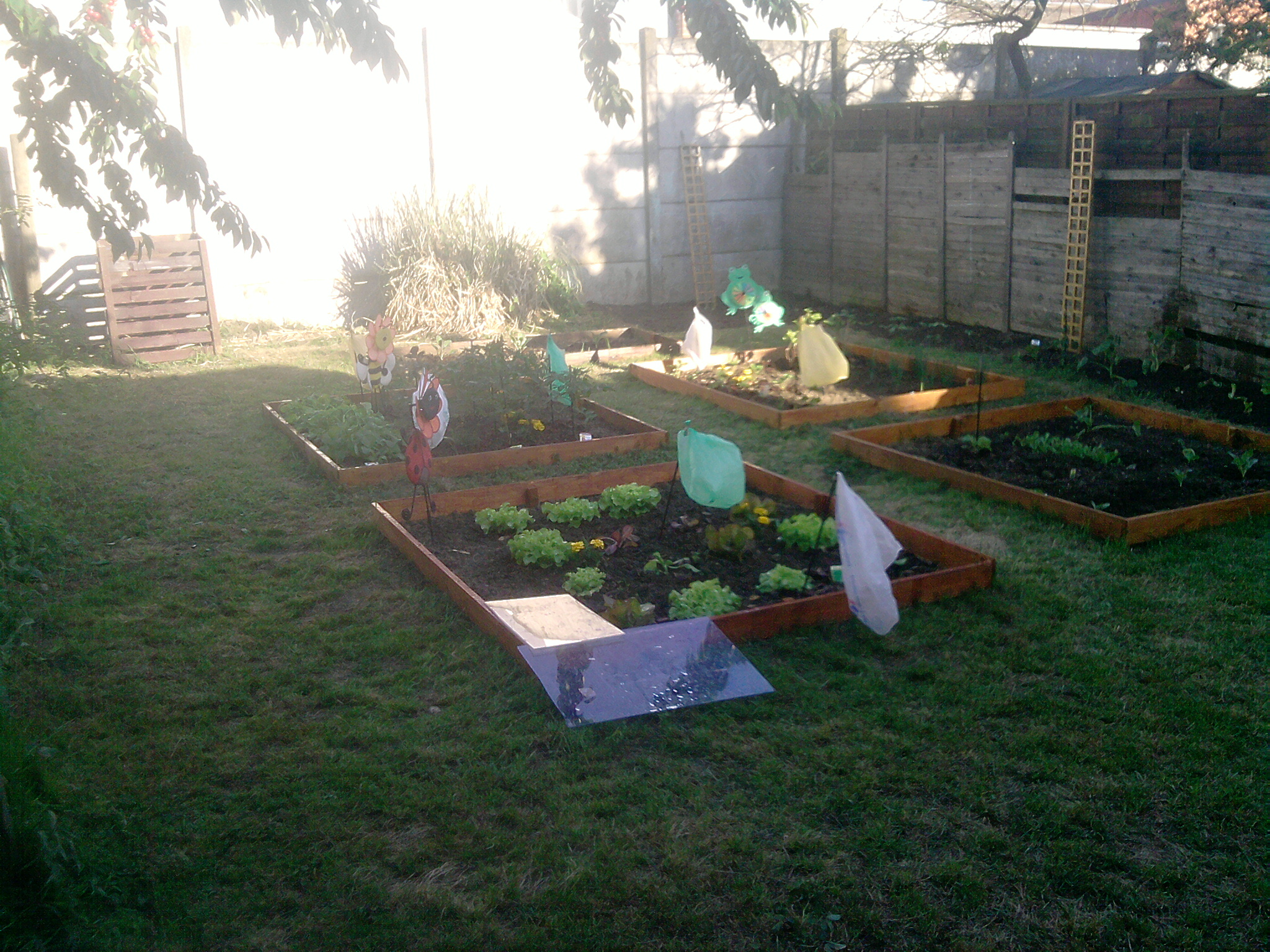 potager en photo de x pipou au jardin forum de jardinage. Black Bedroom Furniture Sets. Home Design Ideas