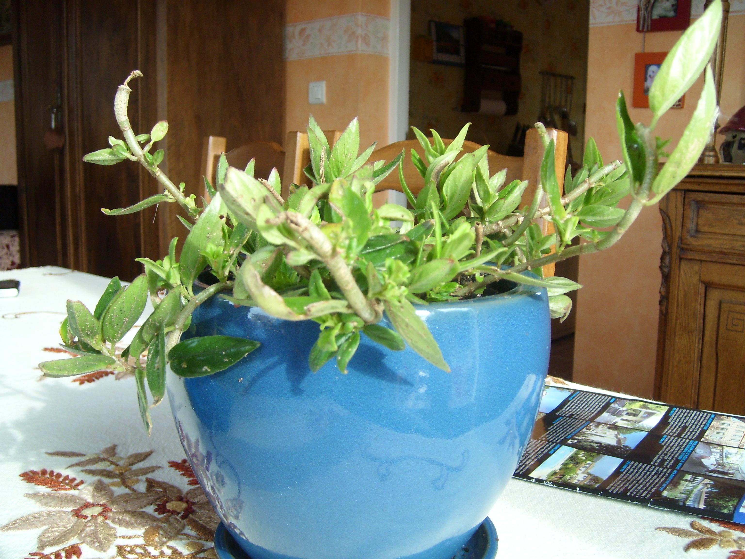 Recherche nom de plante verte - Au jardin, forum de jardinage