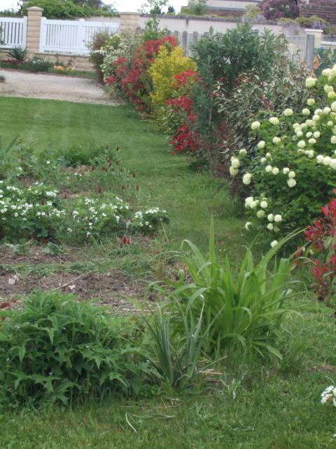 une haie qui pousse vite page 4 au jardin forum de jardinage. Black Bedroom Furniture Sets. Home Design Ideas