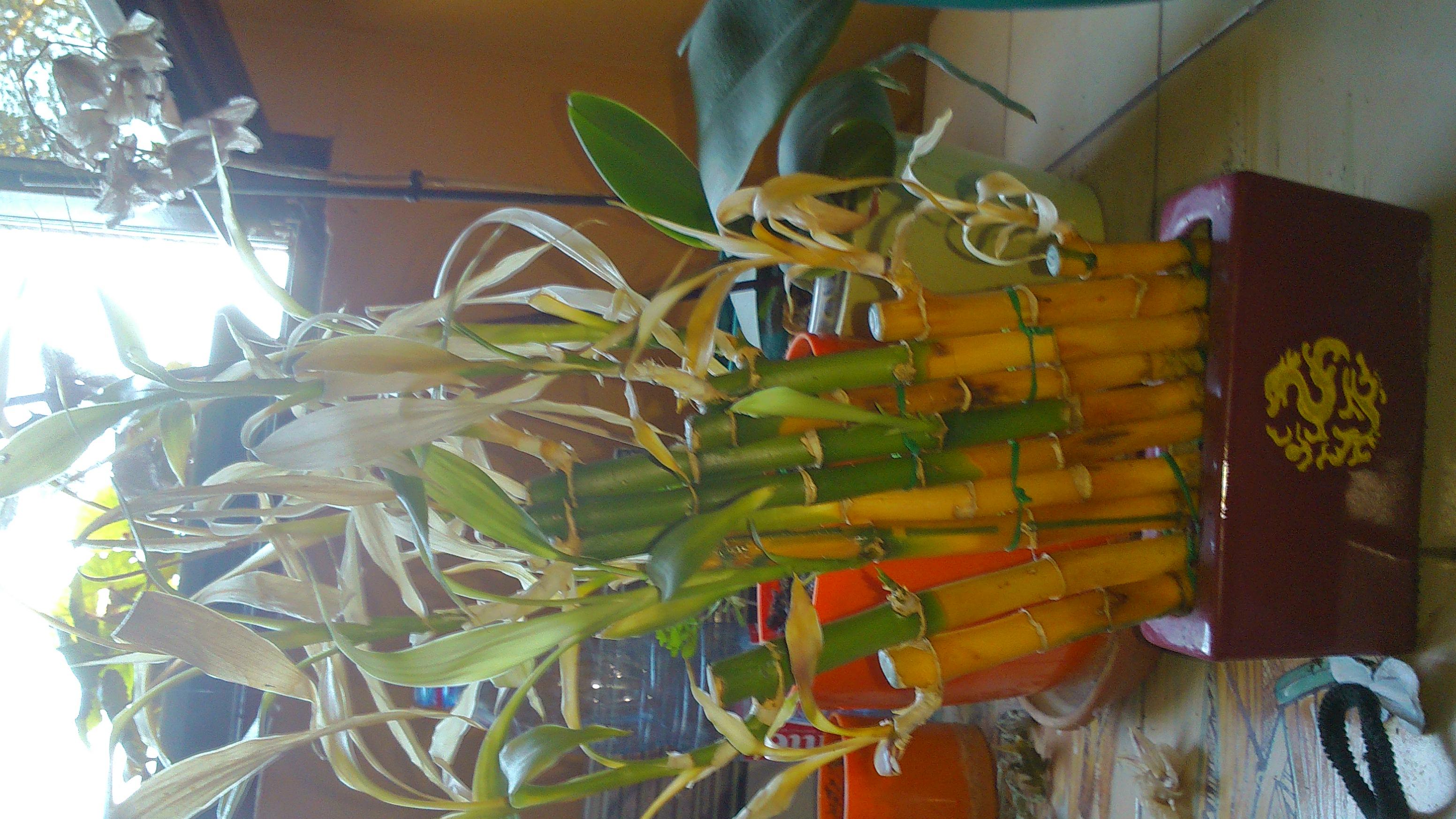 mon bambou jaunit - 28 images - comment construire en bambou la r