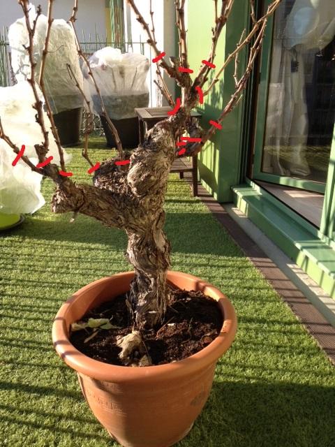 rempotage cep de vigne au jardin forum de jardinage. Black Bedroom Furniture Sets. Home Design Ideas