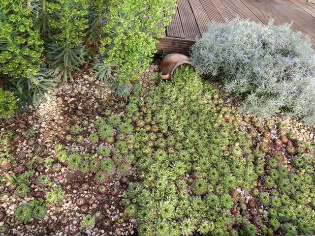Plantes vivaces couvre sol page 22 au jardin forum de jardinage - Plante couvre sol soleil ...