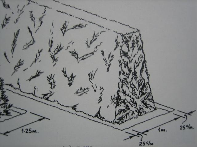 mes vieux troenes d p rissent au jardin forum de jardinage. Black Bedroom Furniture Sets. Home Design Ideas