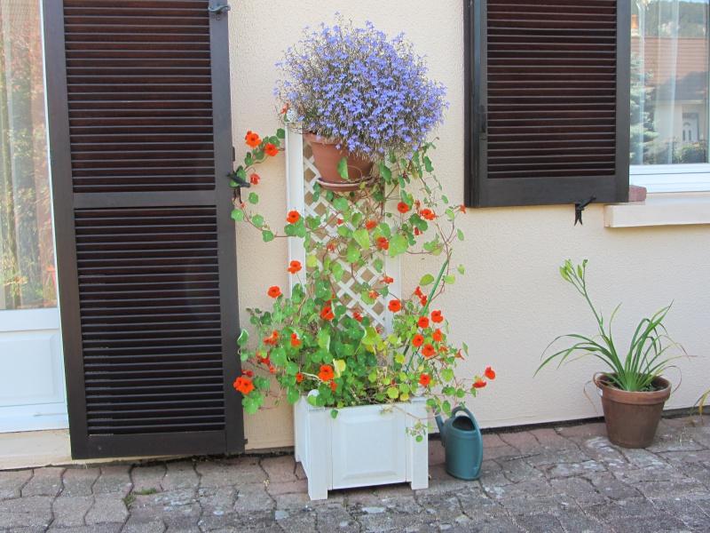 quel choix pour un bac avec treillis pousse rapide au jardin forum de jardinage. Black Bedroom Furniture Sets. Home Design Ideas