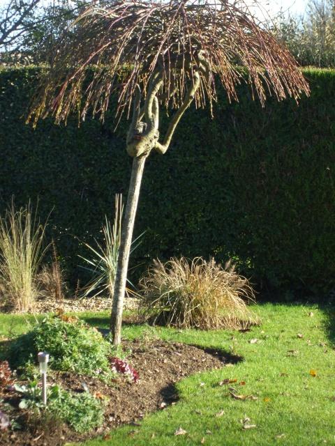 quel arbre pour faire une cachette un enfant au jardin forum de jardinage. Black Bedroom Furniture Sets. Home Design Ideas