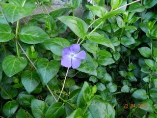 plante grimpante nom