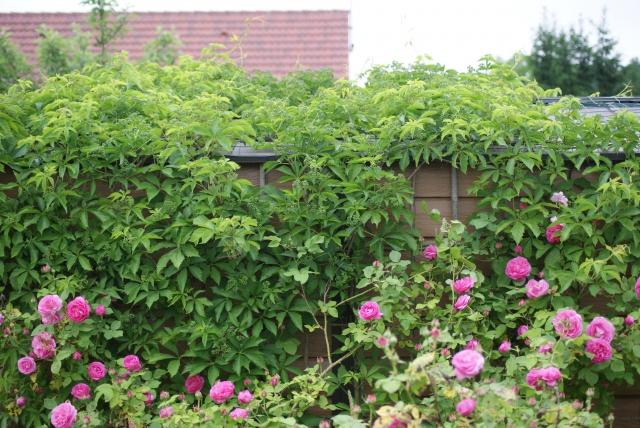 couvrir une cabane de jardin au jardin forum de jardinage. Black Bedroom Furniture Sets. Home Design Ideas