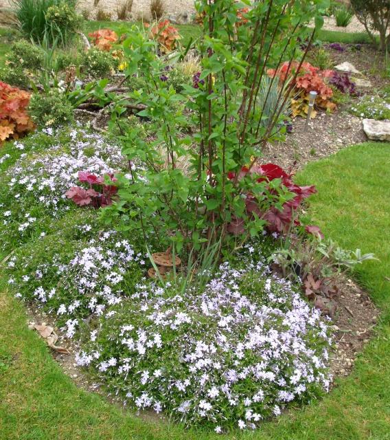 plantes vivaces couvre sol page 18 au jardin forum de jardinage. Black Bedroom Furniture Sets. Home Design Ideas