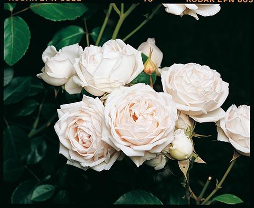 Nom De Fleur Blanche Avec Photo Euroseconde