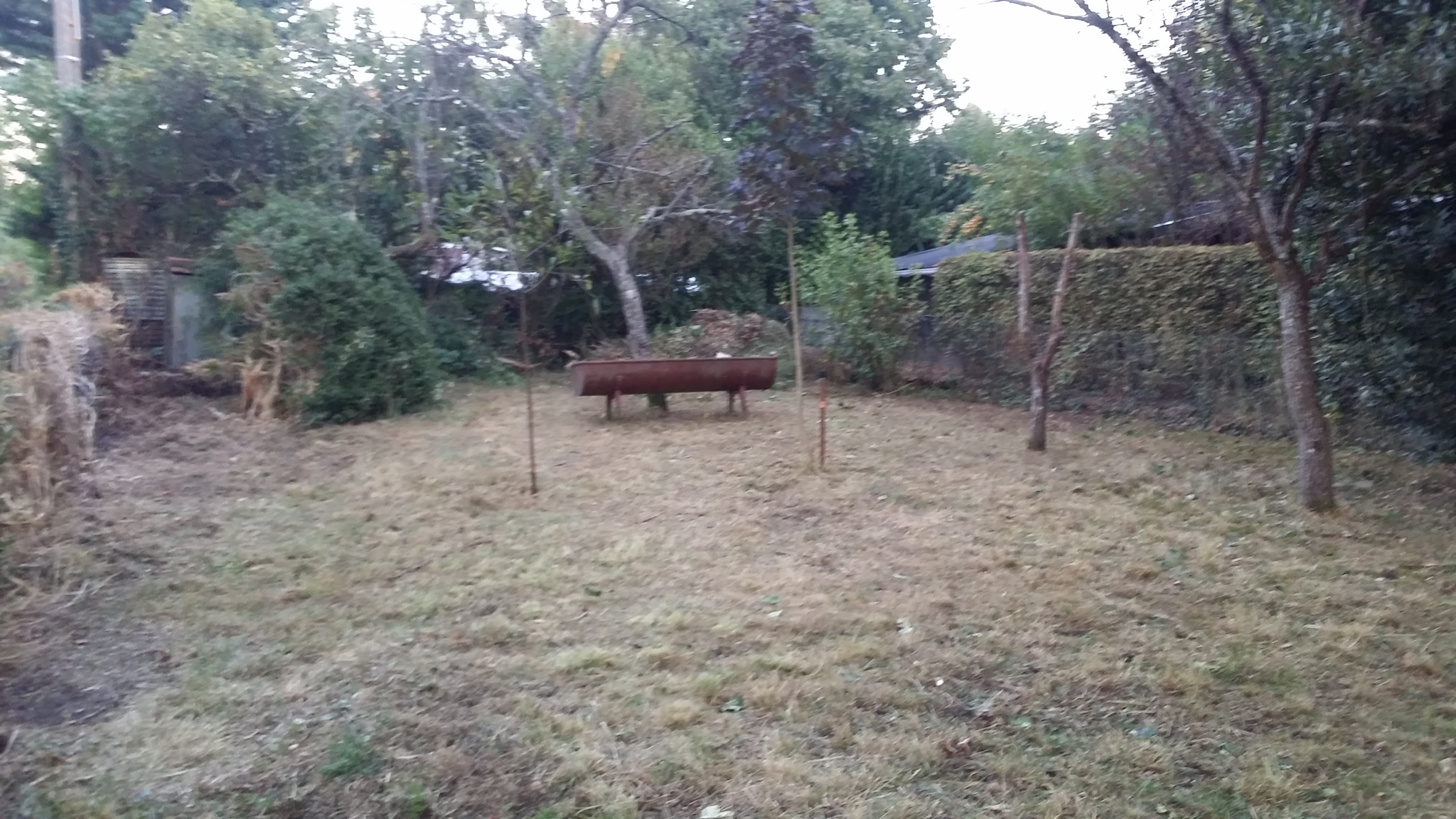 obtenir une belle pelouse au jardin forum de jardinage. Black Bedroom Furniture Sets. Home Design Ideas