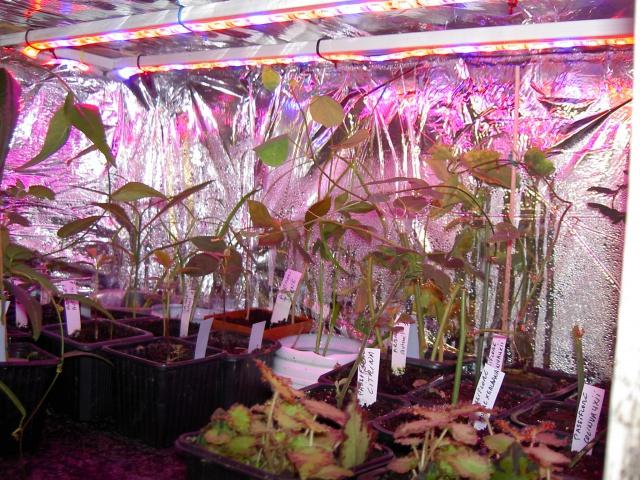 eclairage plantes d 39 int rieur au jardin forum de jardinage. Black Bedroom Furniture Sets. Home Design Ideas