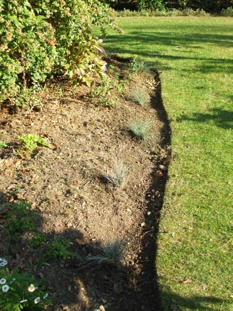 Entretien bordure jardin au jardin forum de jardinage for Entretien jardin 41