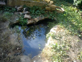 Quelle taille de bassin (Brochet) - Au jardin, forum de ...