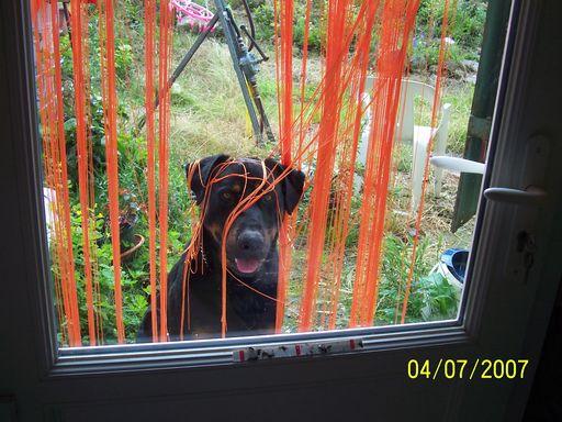 un gros chien dans un jardin au jardin forum de jardinage. Black Bedroom Furniture Sets. Home Design Ideas
